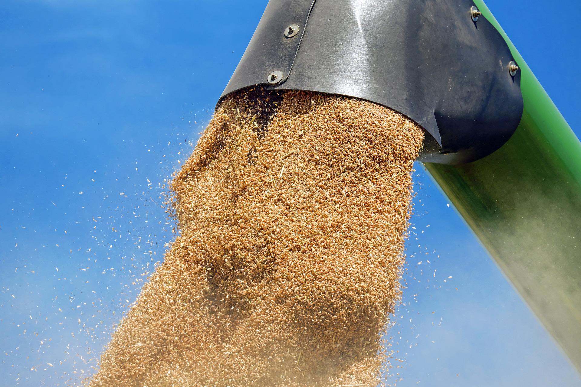 wheat-1508654_1920